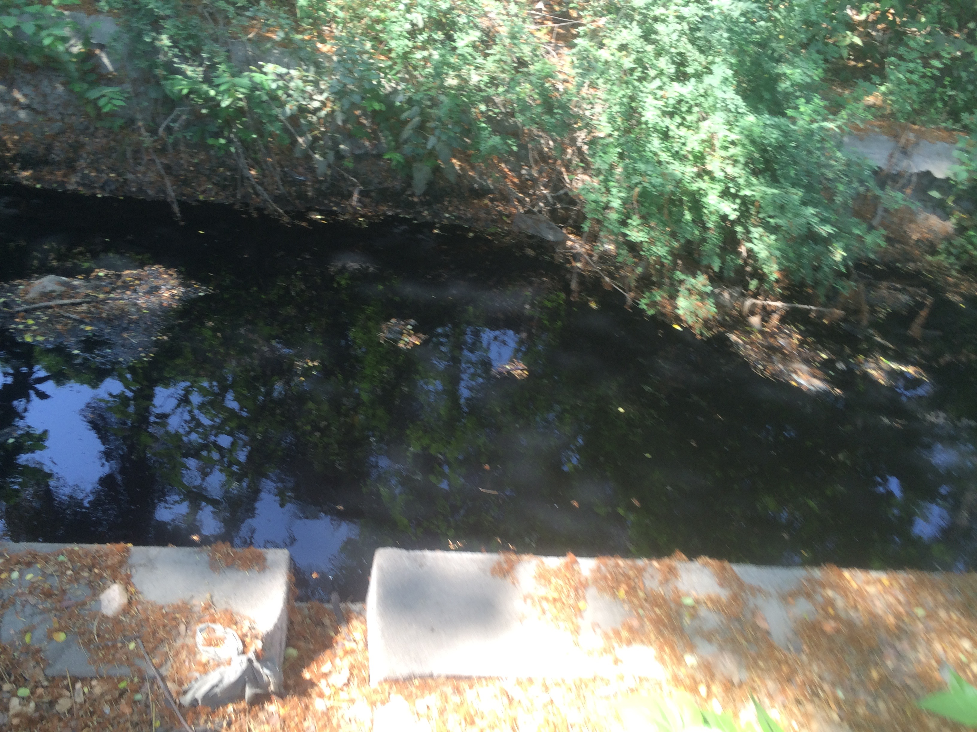Open drain, polluted water